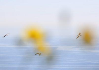 flores-amarillas-gaviotas-03