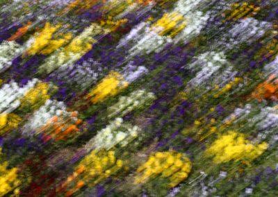 flores-colores-01