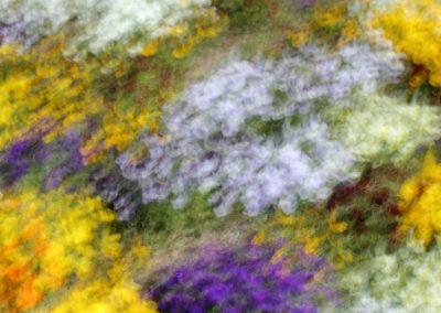 flores-colores-05