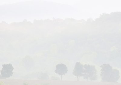 niebla-amer-02