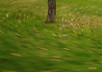 abstraccion-arbol-cesped-hojas