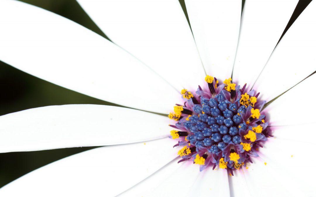 Primera posición en el Concurso Social «Una flor» del Fotoclub Poblenou